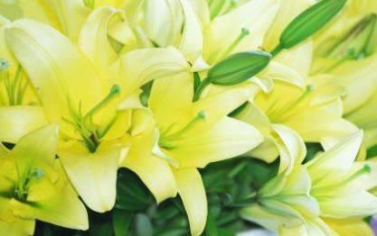 зеленые цветы, цветы зеленого цвета, цветок зеленого цвета