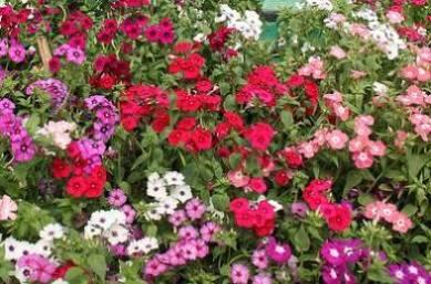 цветы в ноябре, цветок ноября, какие цветы в ноябре, цветы цветущие в ноябре