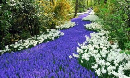 цветы на белорусском языке, цветы на украинском языке, цветы на польском языке, названия цветов по-украински