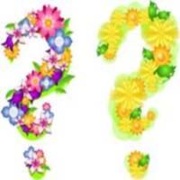 цветок на разных языках мира, переводы цветы
