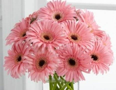 какие цветы подарить девушке на первом свидании, букет розовых гербер в вазе