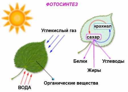 освещение для комнатных растений, фотосинтез