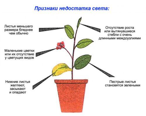 освещение для комнатных растений, недостаток света