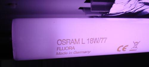 osram fluora t8 для растений