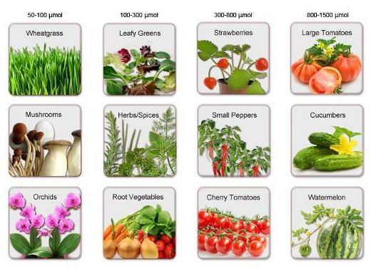 необходимый уровень освещенности для некоторых растений