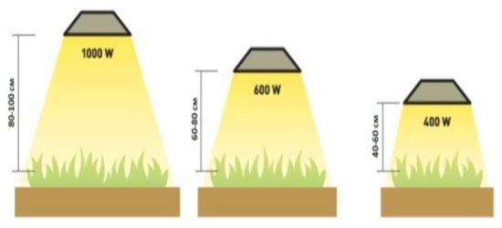 как освещать растения, влияние высоты на силу света