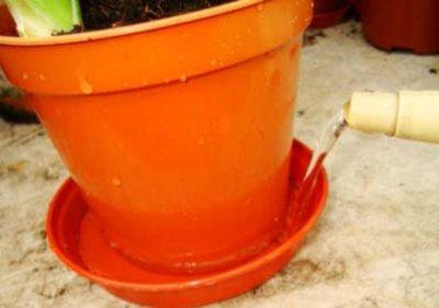 полив растений в поддон, как поливать комнатные растения,