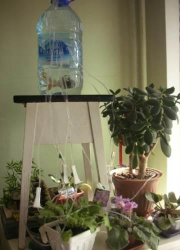 полив комнатных растений в отпуске