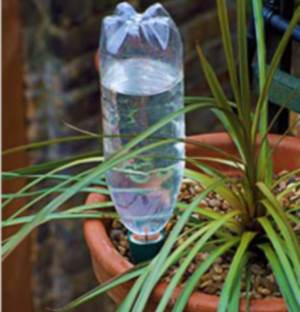 полив растений с помощью бутылки, как поливать цветы в отпуске