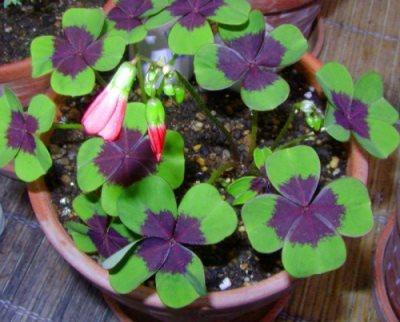полив комнатных растений и цветов