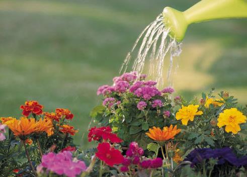 вода для полива комнатных растений, поливальник