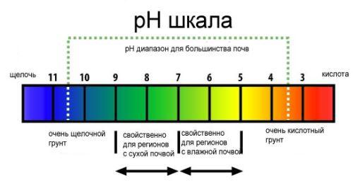определение кислотности почвы лакмусовой бумагой
