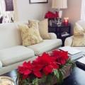 пуансеттия прекраснейшая как ухаживать в домашних условиях,