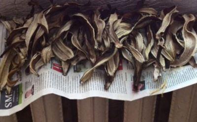 банановая кожура для подкормки комнатных растений