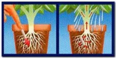 палочки для комнатных растений