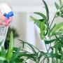 внеконевая подкормка комнатных растений, опрыскивание