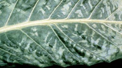 Мозаика на листьях