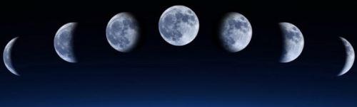 Лунный календарь пересадки комнатных растений, фазы Луны