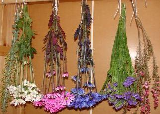 как правильно сушить цветы и растения на воздухе