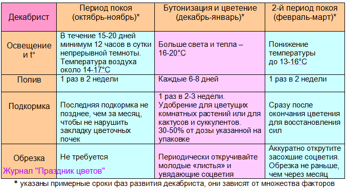 Уход за декабристом во время периода покоя, бутонизации и цветения, осень и зима