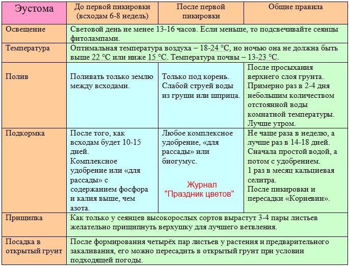 Таблица по уходу за рассадой эустомы в домашних условиях