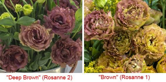 эустома коричневая и бордовая Розанна 1 и2